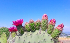 Images_153187_thumb_flores-de-nopal-david-cortina_0_0_1000_622
