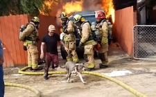 Images_153505_thumb_perrito-sufrio-quemaduras-leves-youtube