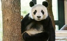 Images_158939_thumb_yuan-yuan-viena-mes-semanas_0_35_739_460