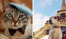 Images_159144_thumb_francia-perro-gato
