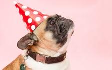 Images_164057_thumb_necesario-consultar-veterinario-tipo-dulce