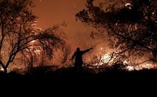Images_166026_thumb_en-total-incendios-forestales-iniciaron_0_23_800_497