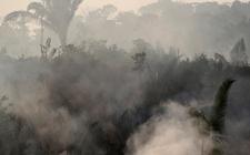 Images_166768_thumb_focos-incendio-afectado-areas-protegidas_0_33_800_498