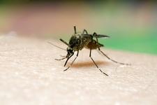 Images_169541_thumb_mosco_dengue