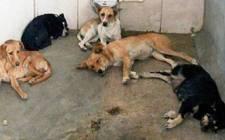 Images_173162_thumb_centro-de-zoonosis-archivo_heraldo_chihuahua_copia