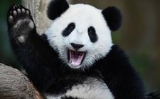 Images_184940_thumb_oso-panda-ya-no-es