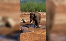 Images_185289_thumb_elefante-asiatico-big-boy-vivio_55_34_1090_679